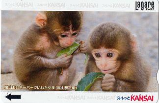 Arashiyama Monley Park