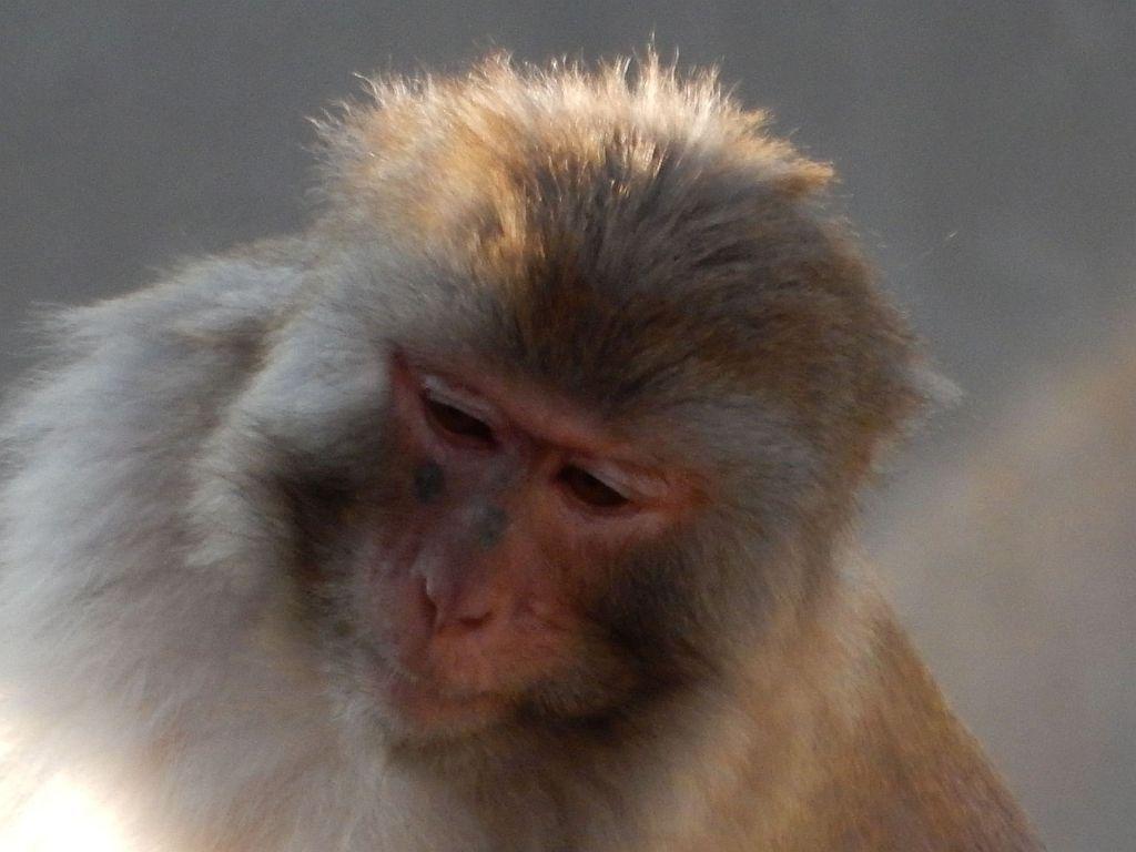 Monkeys at Inokashira Park Zoo
