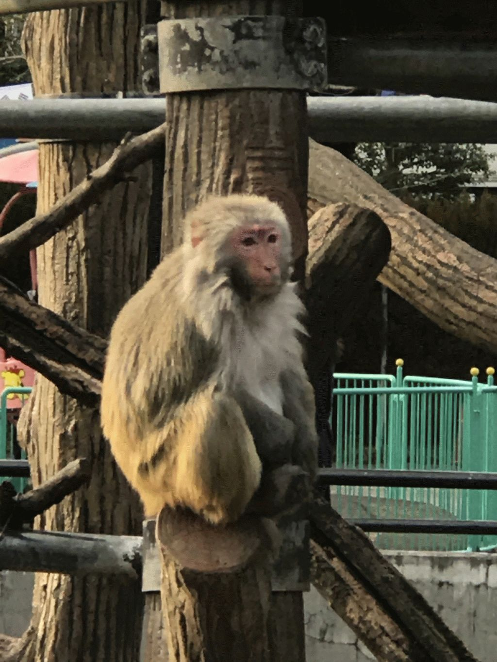 Monkeys at Inokashira Park Zoo