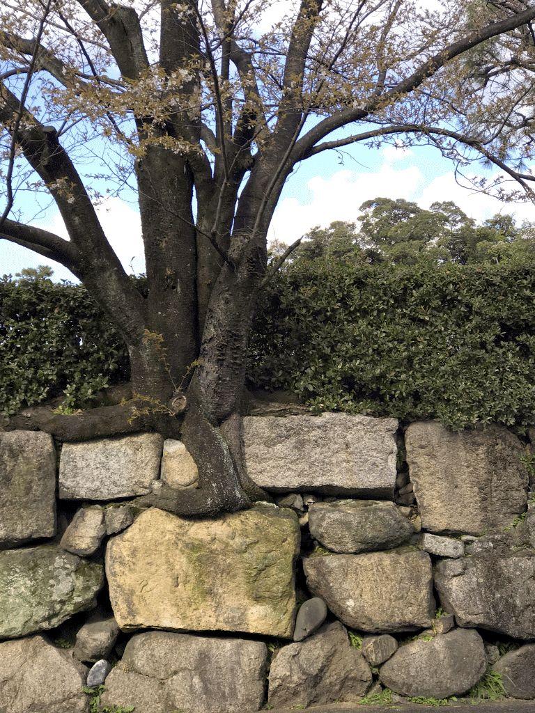 二条城堀川石垣