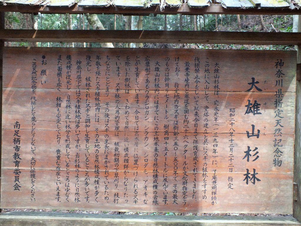 大雄山最乗寺杉林
