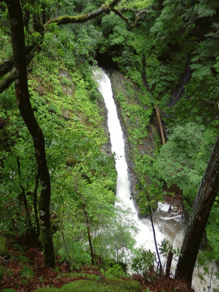 葛川三の滝