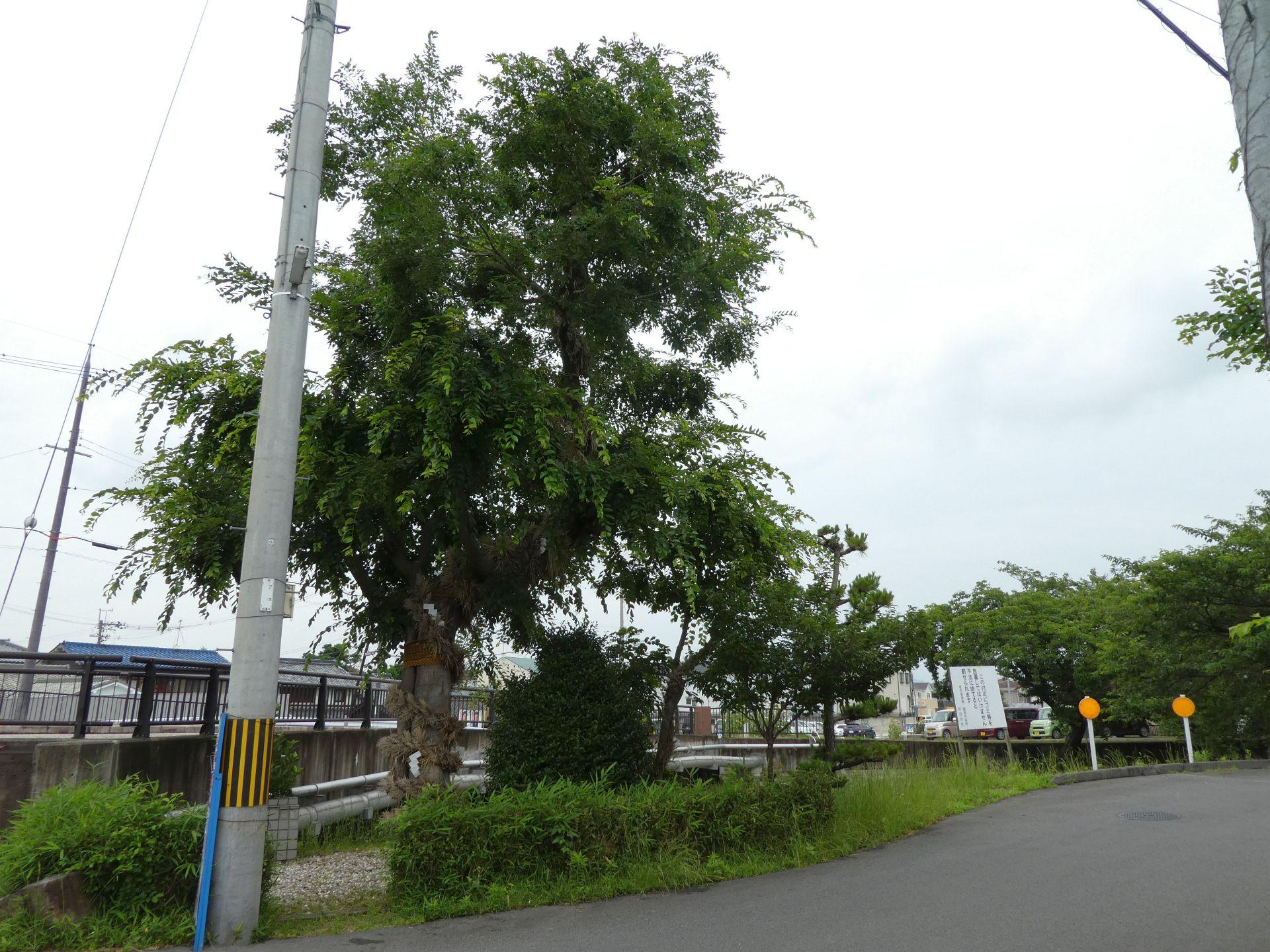 五井町の野神