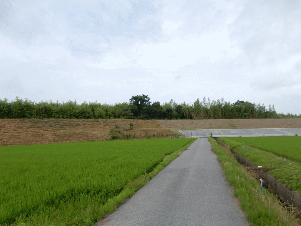 浄土寺町の野神