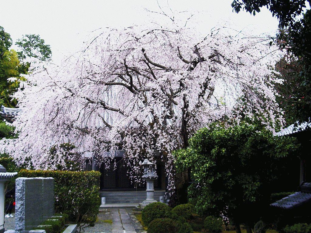 Shaigyo-ji Temple