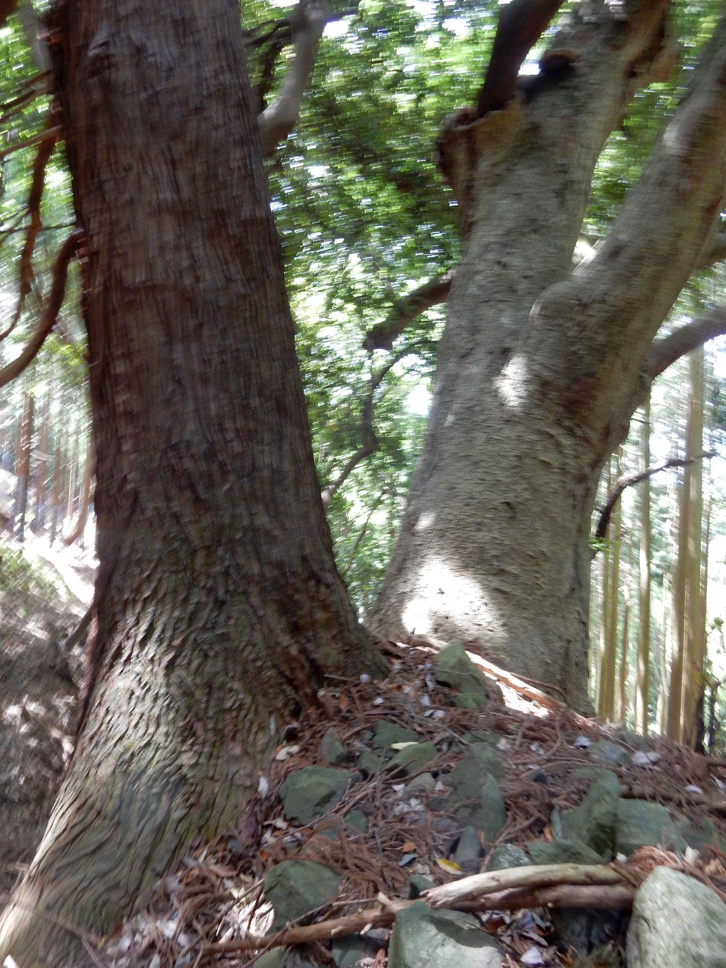 木之本町飯浦の野神