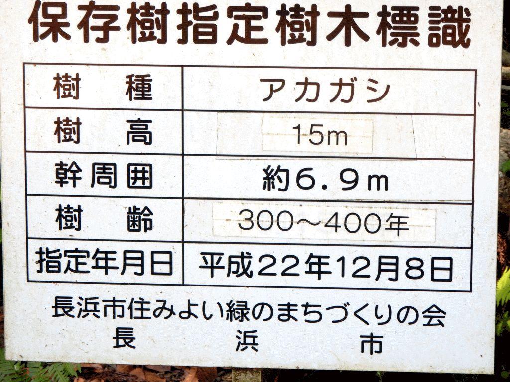 木之本町黒田