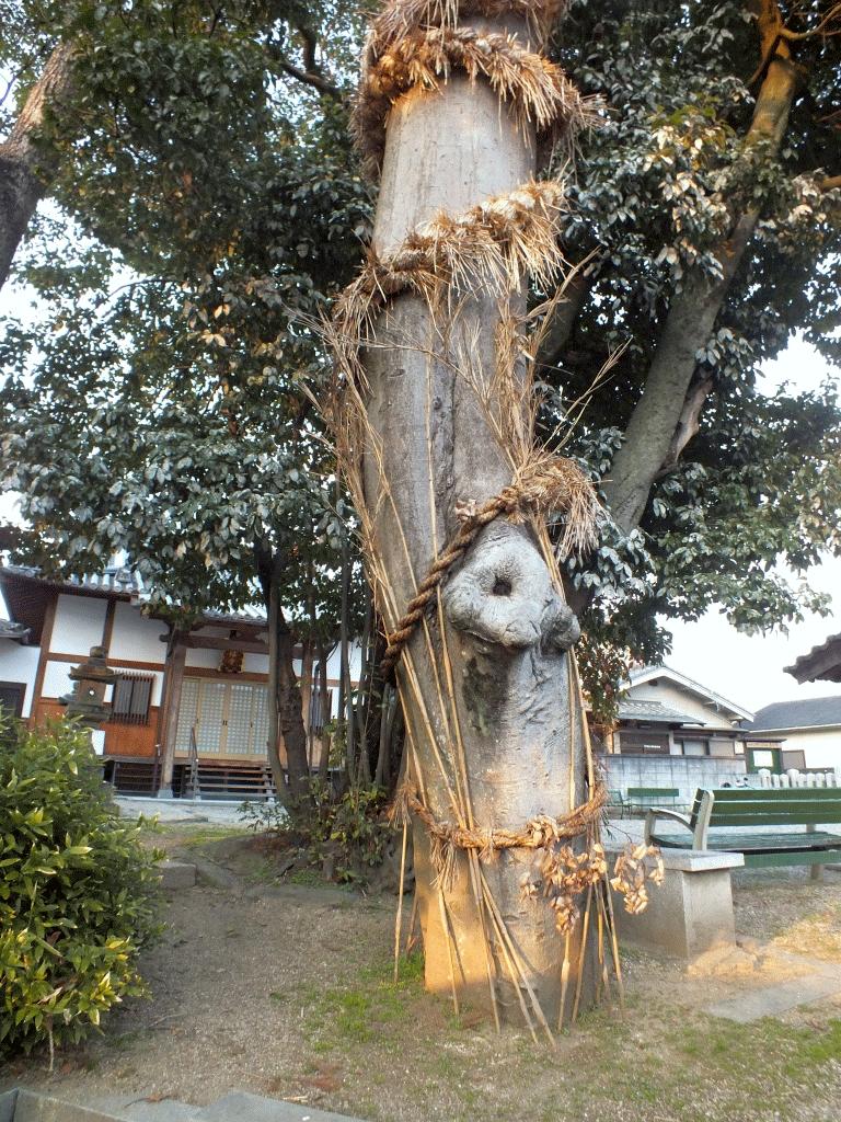 今里杵築神社の蛇巻