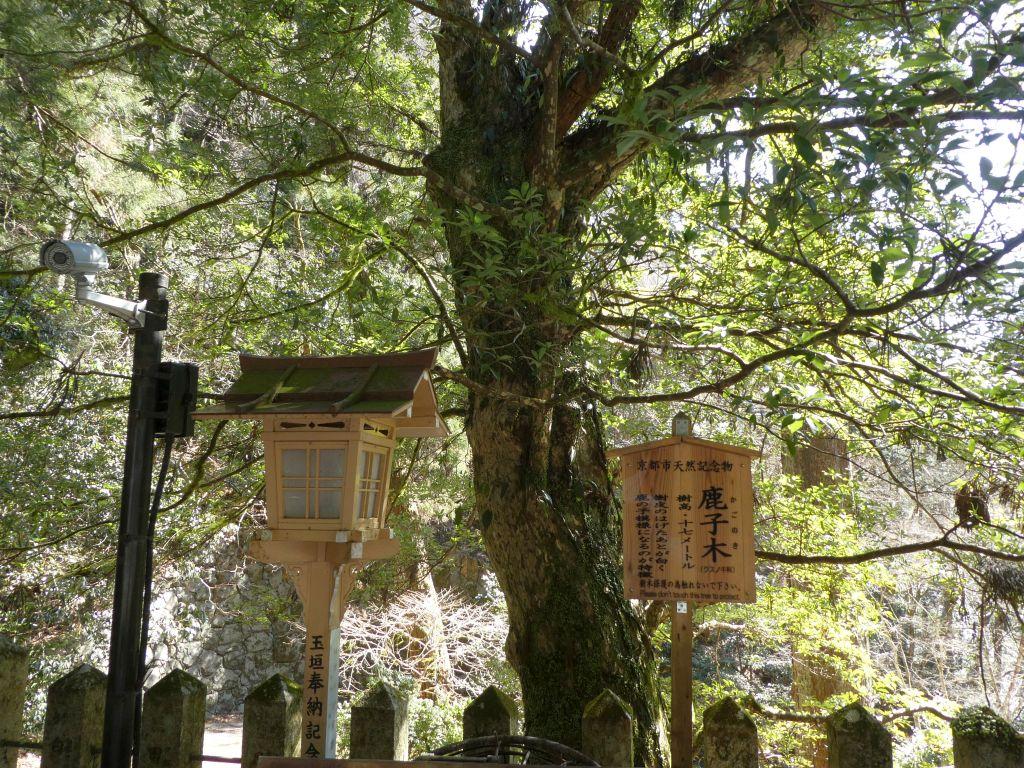 由岐神社鹿子の木