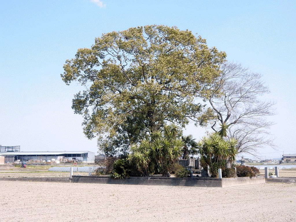 石井町浦庄国実の野神社