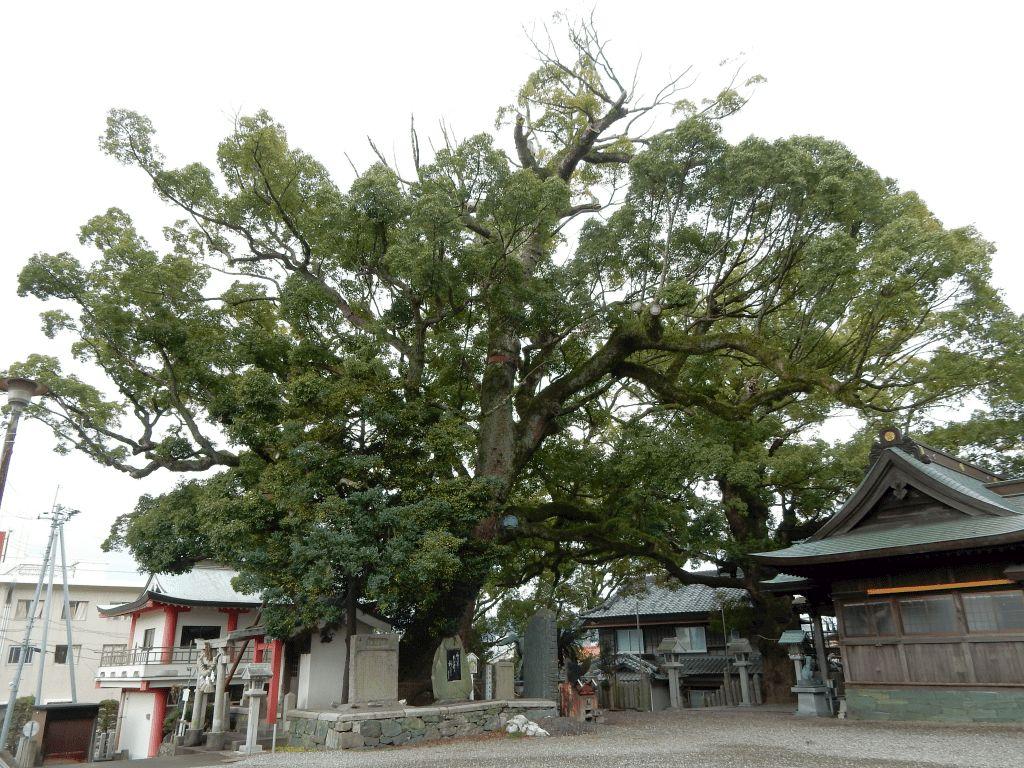 津田寺・津田八幡神社